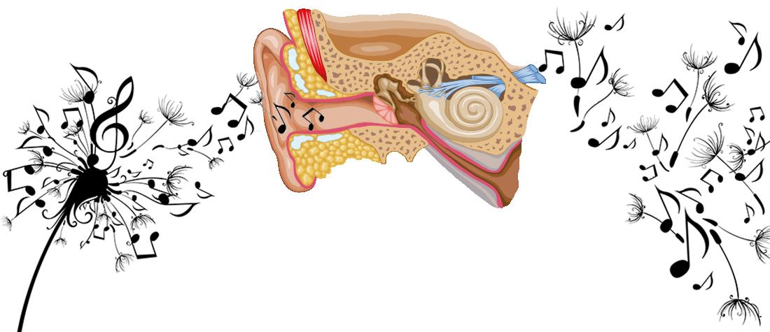 Zeichnung Ohr